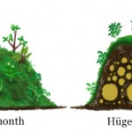 Hügelbedden & Hügelkultur: verhoogde bedden in een gesloten systeem