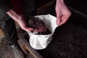 DTN-wormenlevering-0445 - Urbaniahoeve Stadslandbouw vermicultuur