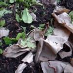 DemoGarden worms survive continuing frost