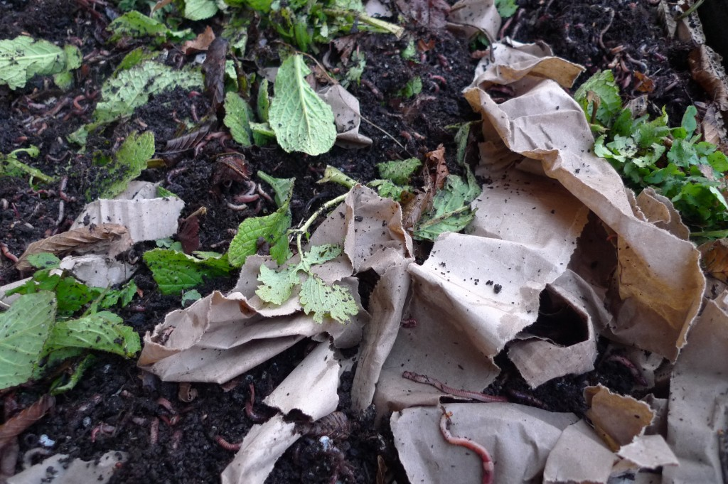 DemoTuinNoord compostwormen overleven de aanhoudende vorstperiode