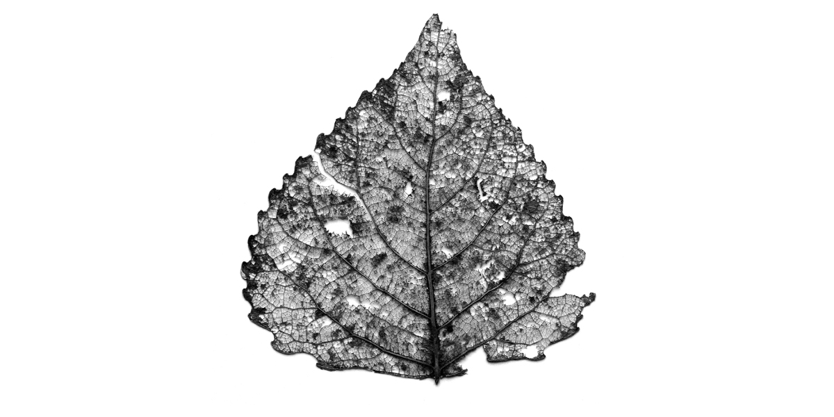entropical-ennecromasse-leafskeleton-opengraph