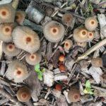 #fungi #foodforest #Urbaniahoeve #urbanagriculture #gardening
