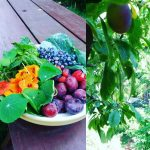 An other #harvest from this #foodforest!! #demotuinnoord #plumtree #berries #cabbage #strawberry #permaculture #love ;)
