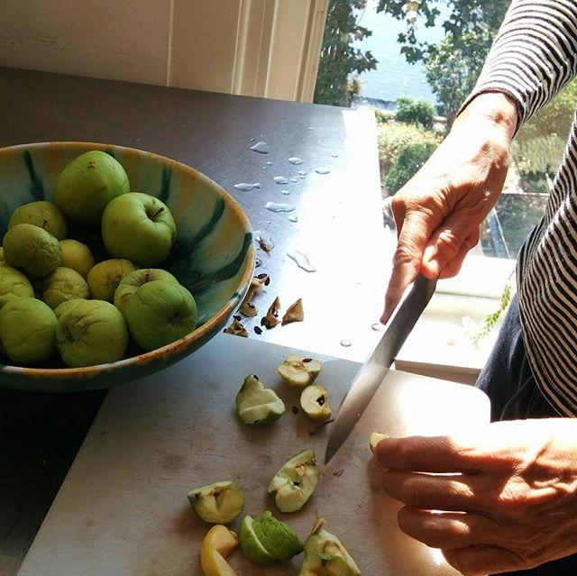 #applesthatfellfromthetree #borscht #DemoGarden #Urbaniahoeve #DemoTuinNoord #foodforest #voedselbos #Amsterdam #Noord